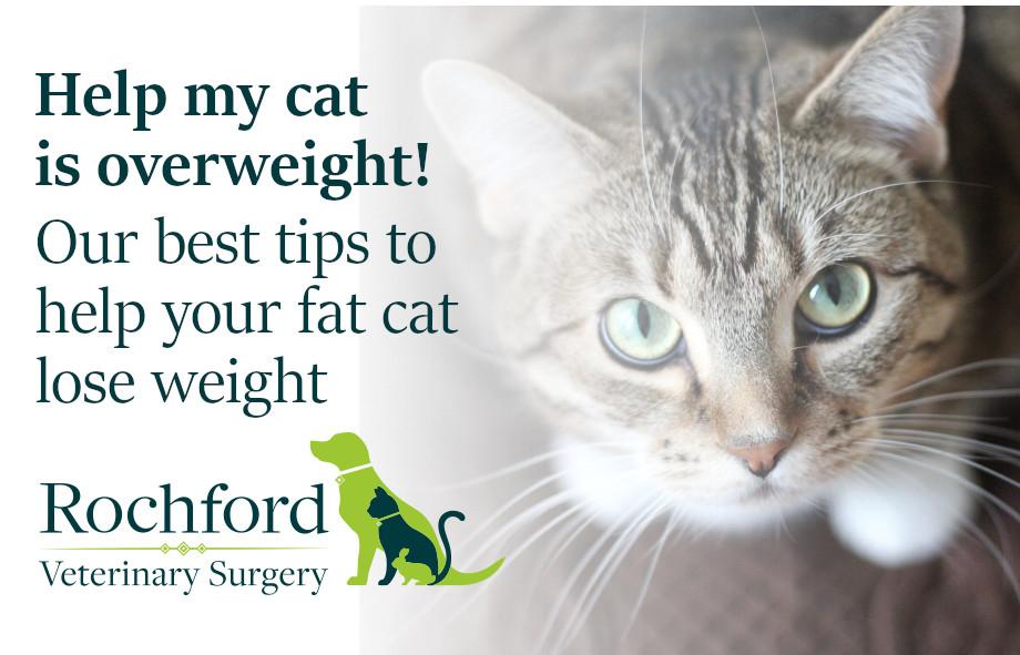 Fat cat weightloss