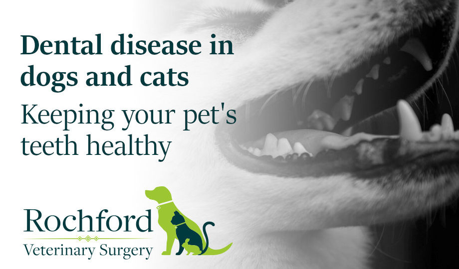 dental-disease-in-dogs-and-cats