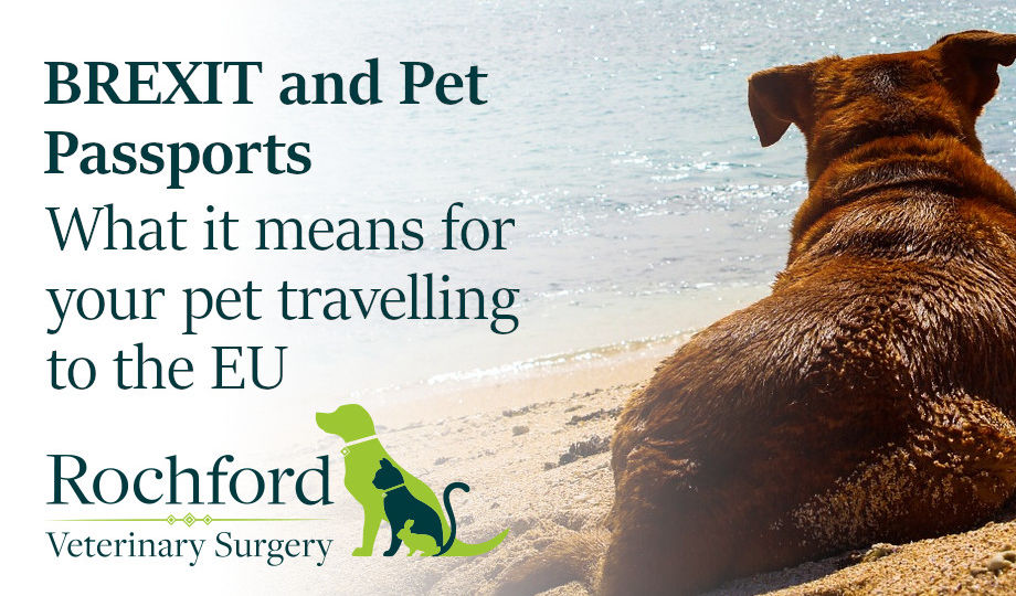 brexit-and-pet-passports