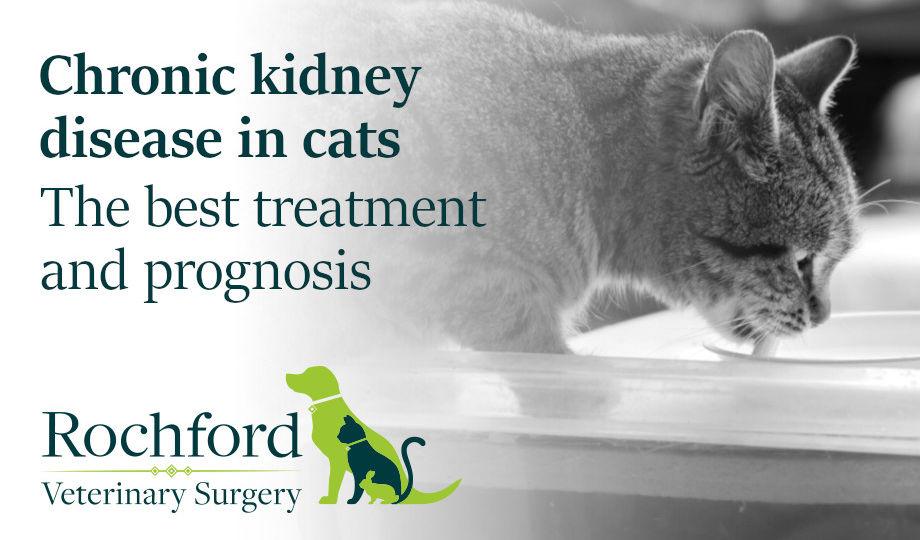 chronic kidney disease in cats