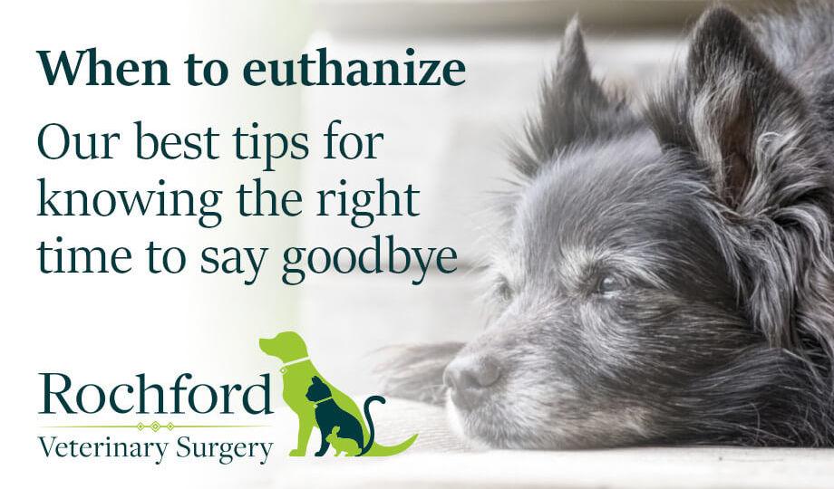 When to euthanize
