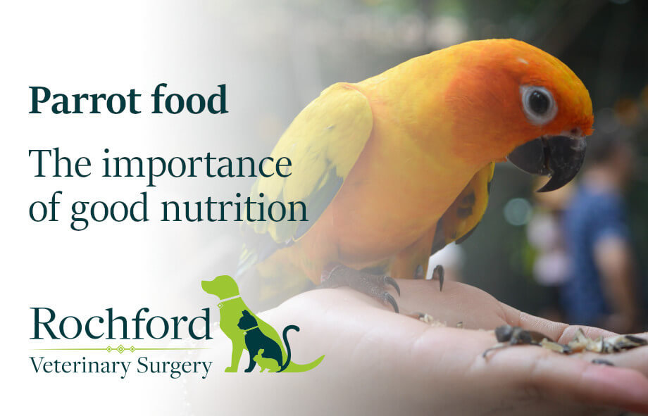 Parrot food - the importance of good nutrition