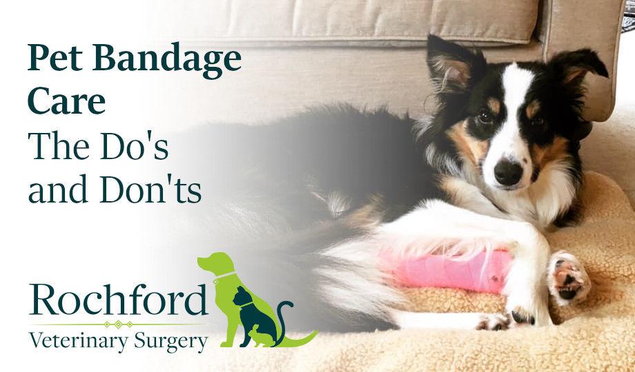 Pet bandage